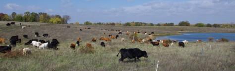 cropped-purdin-farm-october-2012-004.jpg