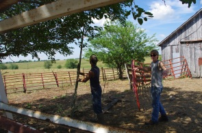 Nathan and Christian tearing out and rebuilding corral.
