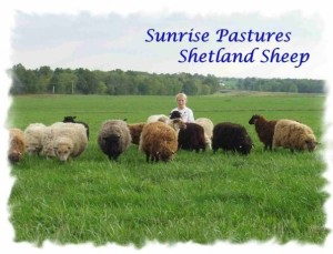 Jessica with her Shetland Sheep - 2002