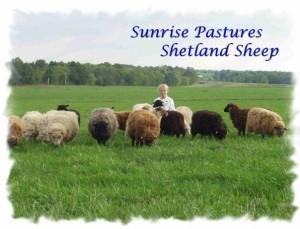Jessica with her Shetland Sheep - 2002
