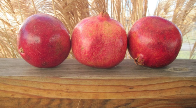 Pomegranate (Rimon) Season