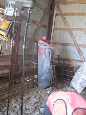 Shearing Merinos - 5-7-2014 (9) - Copy