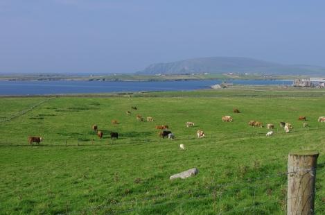 Shetland Day 3 9-22-14 225 - Copy