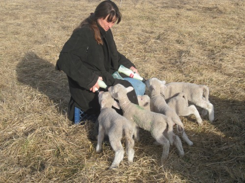 Lambing out of season!  Bad, bad mistakes.