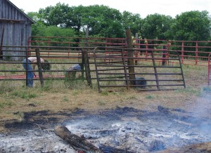 Christian Finck and Nathan Powell removing and repairing old corral as well as cleaning up and burning rubbish.  Hot job!