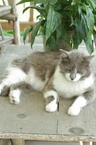 Thunder relaxing on the porch table.