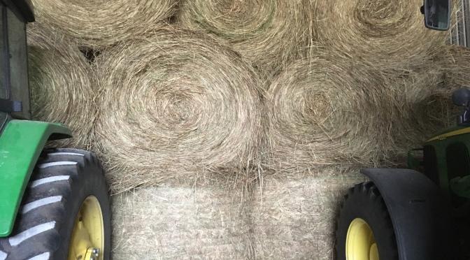 Buying Hay