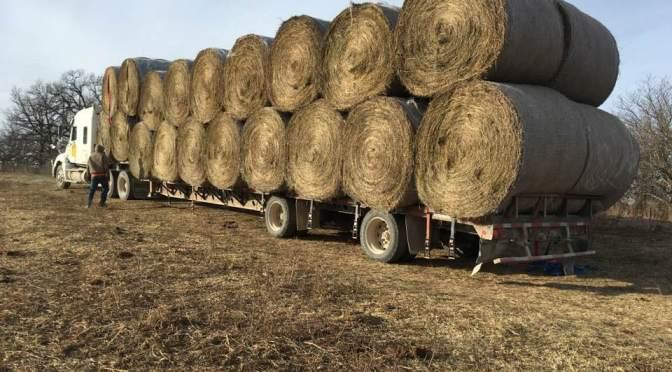 Winter Hay Buying