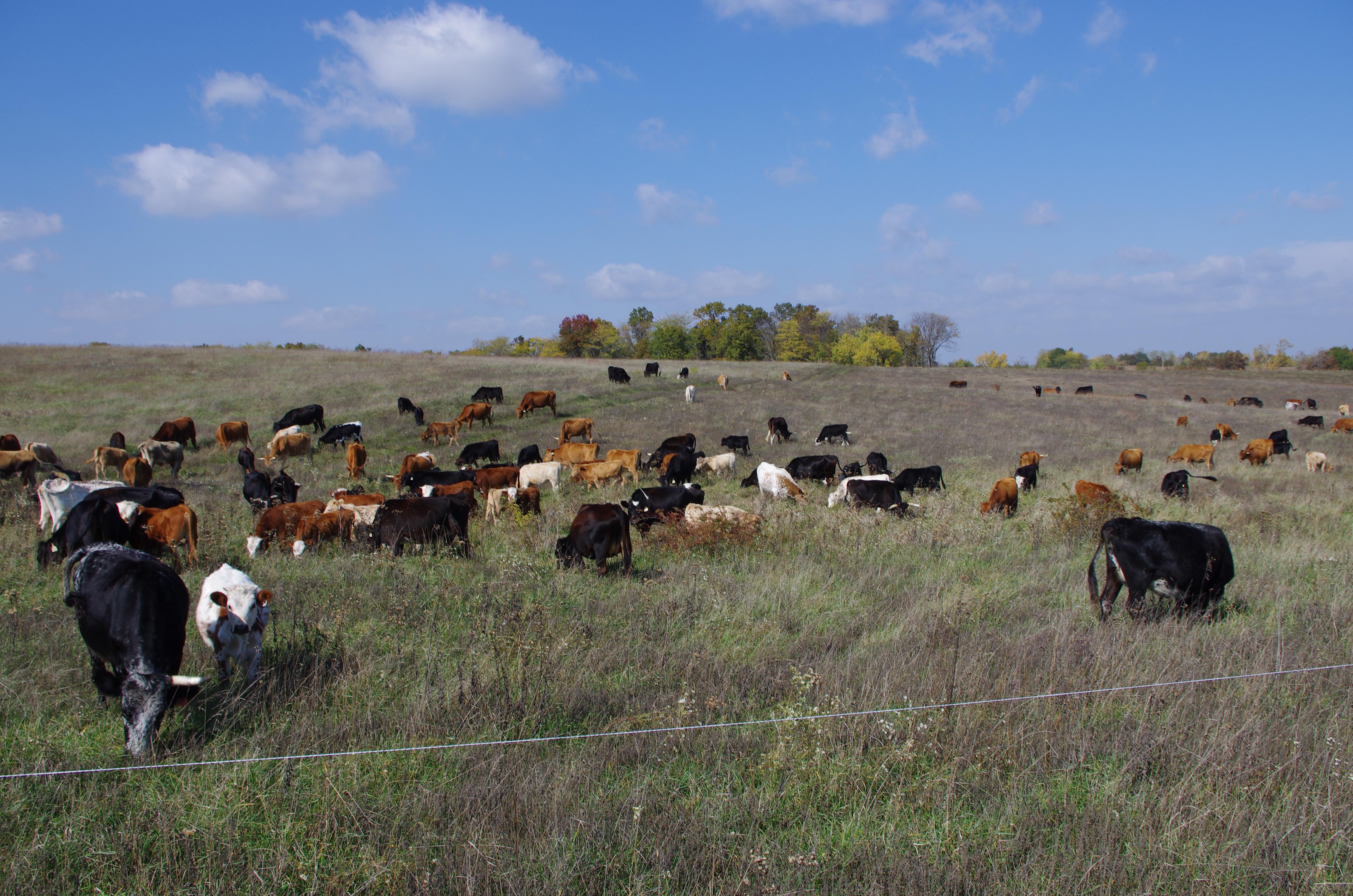 Purdin farm - October 2012 002