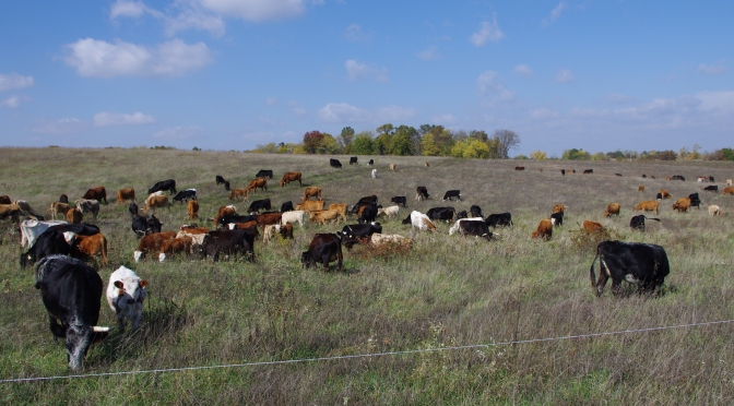 Grazing Management Primer – Part 1