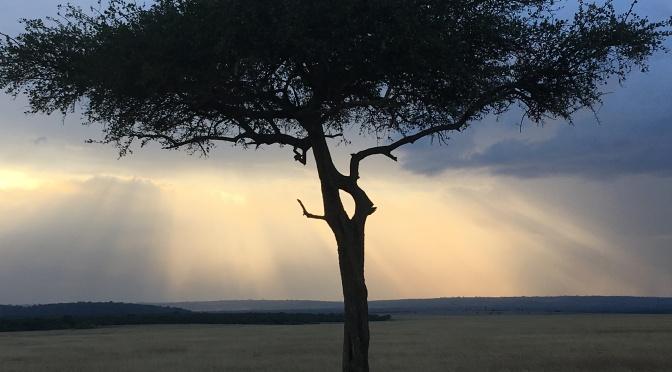 On Safari in Masai Mara National Reserve