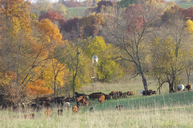 About the Farm this Fall