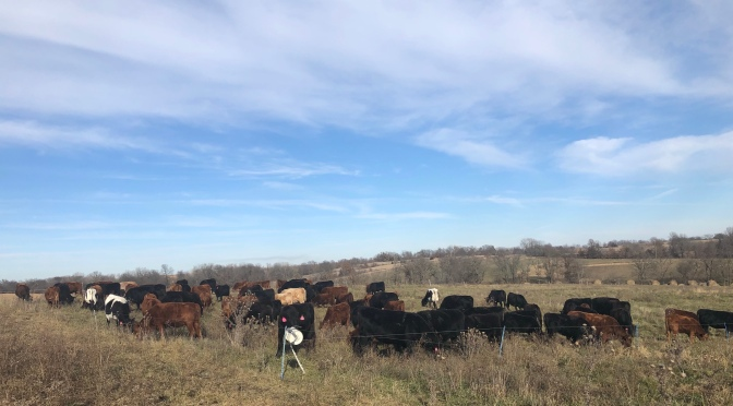 Total Grazing – Day 1